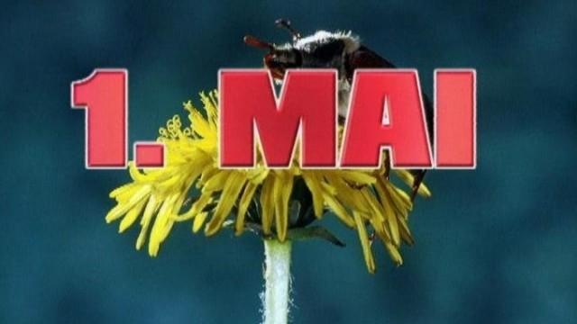 argentinische honigbiene flattern für sex