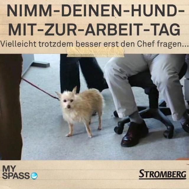 Nimm-Deinen-Hund-Mit-zur-Arbeit-Tag
